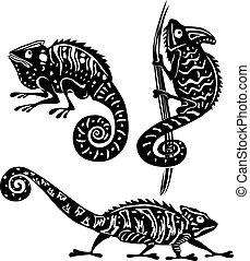 biały, czarnoskóry, kameleon