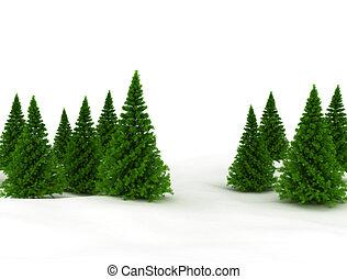 biały, drzewa sosny, odizolowany