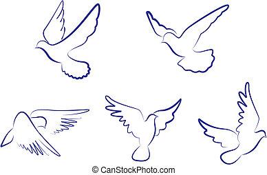 biały, gołębice