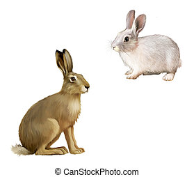 biały królik, posiedzenie, szary, hare., odizolowany,...