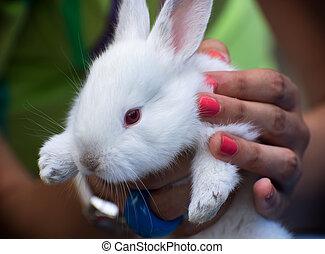 biały królik, w, siła robocza