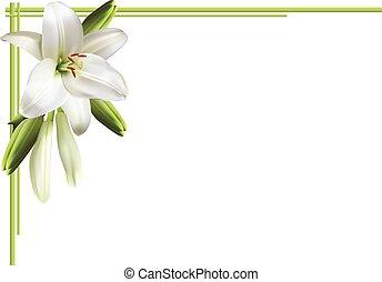 biały, lilie, karta, powitanie