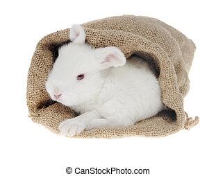 biały, mały, królik, w, przedimek określony przed rzeczownikami, torba