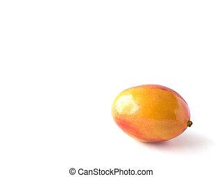 biały, mangowiec, odizolowany, tło