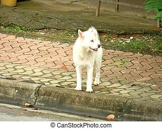 biały pies, usługiwanie