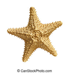 biały, rozgwiazda, odizolowany, tło