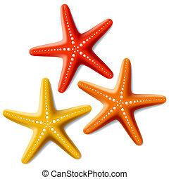 biały, rozgwiazdy, trzy