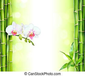 biały, storczyk, z, bambus, -, zdrój