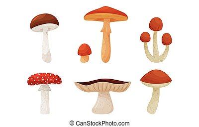 biały, wektor, komplet, las, różny, tło, odizolowany, grzyby