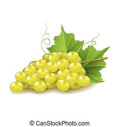 biały, wektor, odizolowany, winogrona