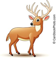 bianco, cervo, isolato, fondo, cartone animato