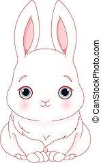 bianco, coniglietto