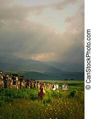 bianco, e, marrone, cavalli selvaggi, in, uno, field.