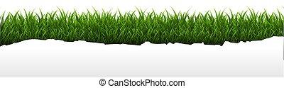 bianco, erba, bordo, isolato, fondo