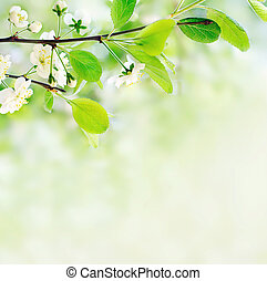bianco, fiori primaverili, su, uno, ramo albero