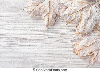 bianco, foglie, sopra, legno, grunge, fondo., autunno, acero
