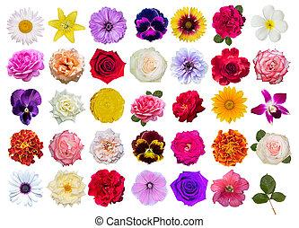 bianco, fondo., fiori, set, isolato