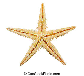 bianco, isolato, starfish