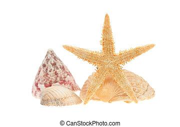 bianco, mare, isolato, starfish, sgusciare