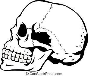 bianco, nero, cranio umano
