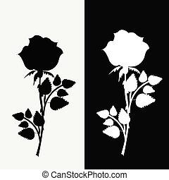 bianco, nero, due, rose