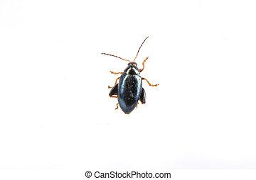 bianco, nero, insetto, fondo