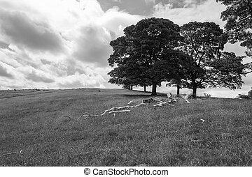 bianco, nero, paesaggio, inglese