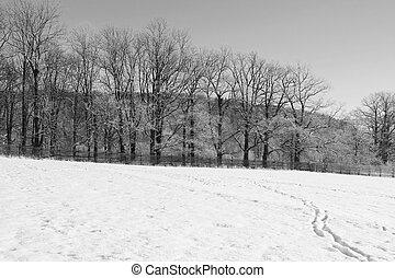 bianco, nero, paesaggio inverno