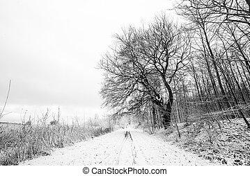 bianco, paesaggio, nero, alberi inverno