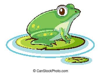 bianco, rana verde, fondo