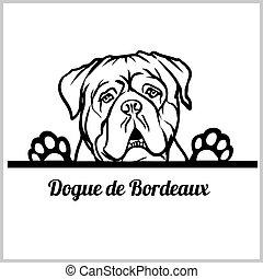 bianco, sbirciando, faccia, de, razza, testa, isolato, bordeaux, dogue, -, cani, cane