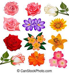 bianco, set, fiore, fondo