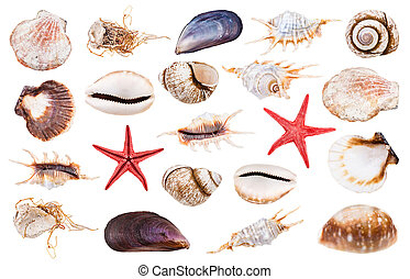 bianco, set, isolato, vario, seashells
