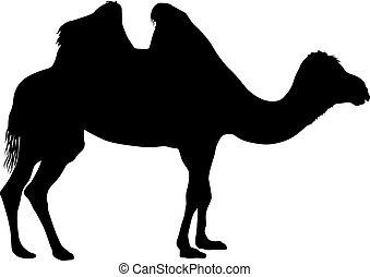 bianco, silhouette, fondo, cammello