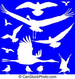 bianco, uccelli, silhouette, sopra, blu