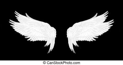 bianco, uccello nero, fondo, ali