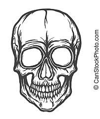 bianco, vettore, fondo, isolato, cranio