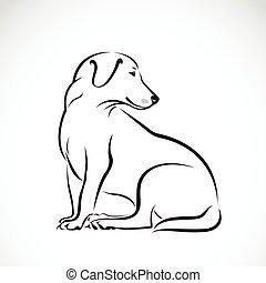 bianco, vettore, labrador, fondo, cane