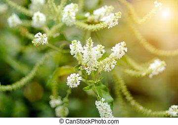 bianco, wildflowers, aromatico
