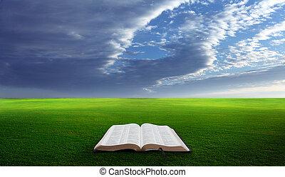 bibbia aperta, in, field.