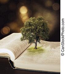 bible., albero