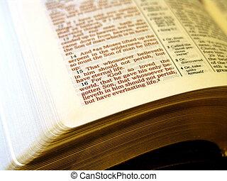 bible, john3:16, saint