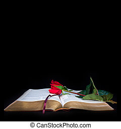 Open Bible with red rose on a black background with red rose