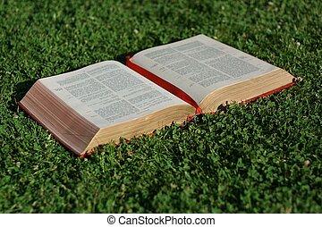 biblia, cristiano, cristianismo, evangelio, abierto, o