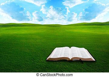 biblia, en, herboso, campo