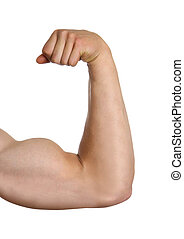 biceps isolated on white