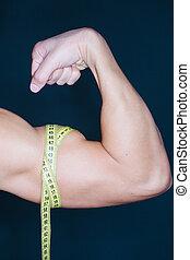 biceps, measurment