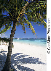 biches, isla, árbol, mauricio, palma, aux, playa, trou