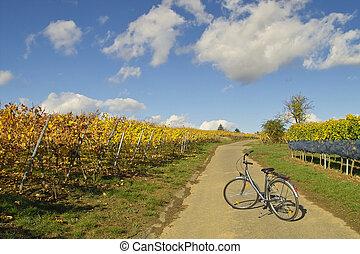 bicicleta, em, wineyards