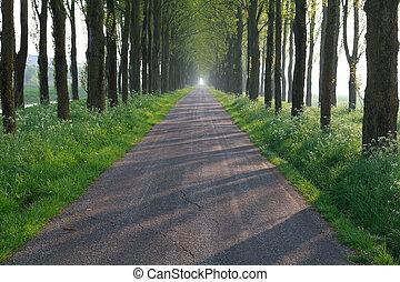 bicicleta, estrada, em, árvore, fila, túnel